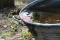 Regenwassernutzung spart bares Geld