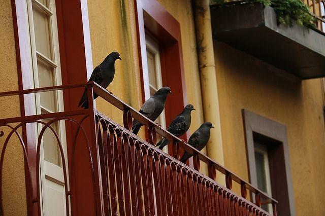 Eigentumswohnung: Tauben füttern verboten