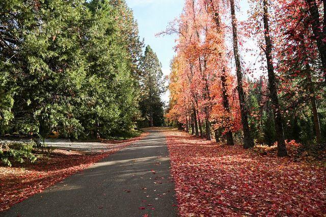 Herbstlaub räumen: Das sind Ihre Pflichten