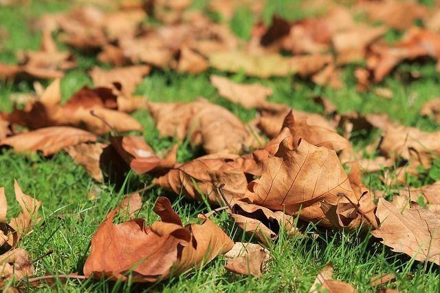Die Laubzeit im Herbst